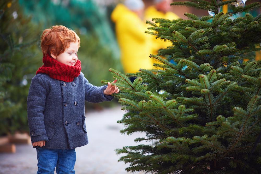 kerstboom kopen groningen