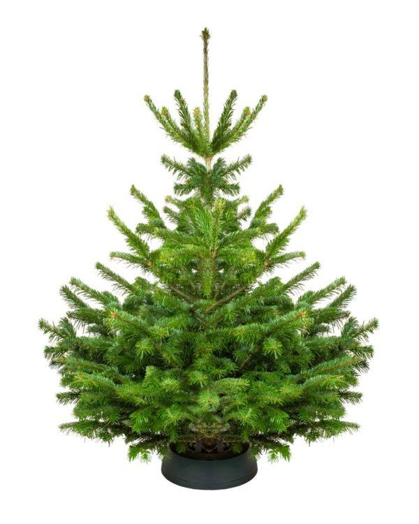 nordmann kerstboom kopen Groningen