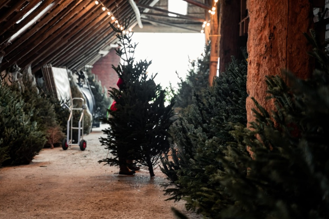 kerstboom groningen
